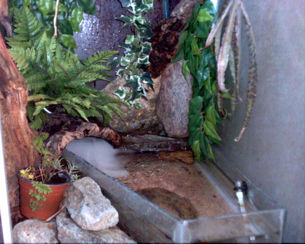 mes dragons d eau suite sur zoe 187 terrarium